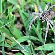 Lurking Spider In The Grass Art Print