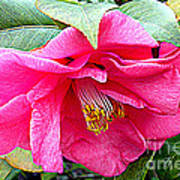 Luscious Pink Hdr Art Print