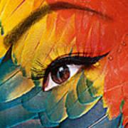 Macaw Art Print by Yosi Cupano