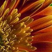 Macro Blumen Art Print
