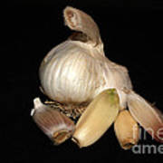 Macro Garlic Art Print