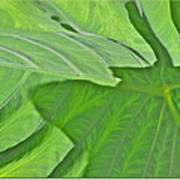 Macro Leaf Structure Art Print