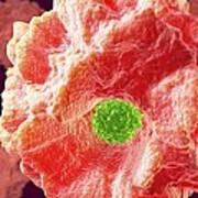 Macrophage Engulfing Pathogen, Artwork Art Print by David Mack
