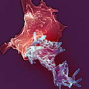 Macrophage Engulfing Tuberculosis Vaccine Art Print