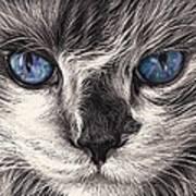 Mad Cat Art Print by Elena Kolotusha