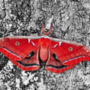 Madam Moth - Red White And Black Art Print