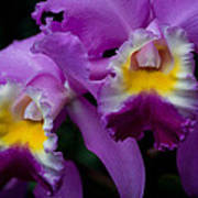 Maddie's Orchid Art Print