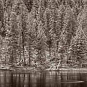 Madison River Yellowstone Bw Art Print
