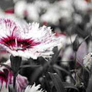 Magenta Flower Art Print