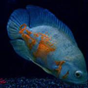 Magic Fish Name Oscar  Art Print