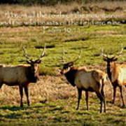 Magnificent Bull Elk Psalm 50 Art Print
