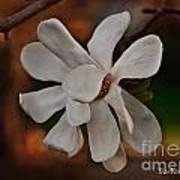 Magnolia Bloom Art Print