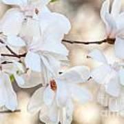 Magnolia Spring Art Print
