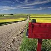 Mailbox On Country Road, Tiger Hills Art Print
