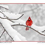 Male Cardinal In Snow Art Print