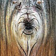 Briard Shepherd And Butterfly Art Print