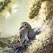 Mama Dove Art Print