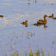 Mama Duck And The Kiddies Art Print