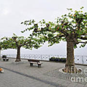 Man With Dog Walking On Empty Promenade With Trees Art Print