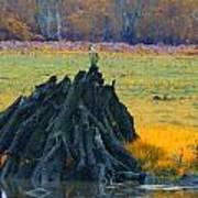 Mangrove Lookout Art Print