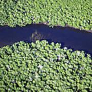 Mangrove River Art Print