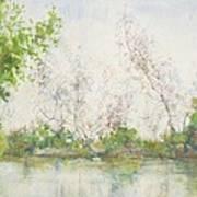 Mangrove Swamp Art Print