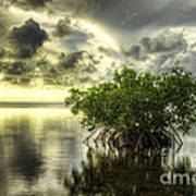 Mangroves I Art Print