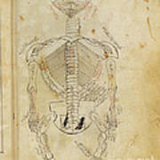 Mansurs Anatomy, Skeletal System, 15th Art Print