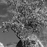 Manzanita Outcrop Art Print