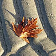 Maple Leaf Forever Art Print