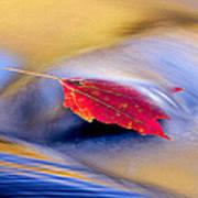 Maple Stream Art Print