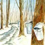 Maple Trail Art Print