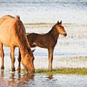 Mare And Foal Art Print by Bob Decker
