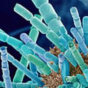 Marine Diatoms, Sem Art Print
