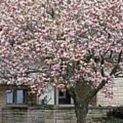 Marinette Magnolia Print by Mark J Seefeldt