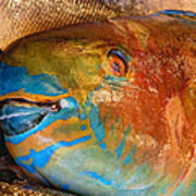 Market Fresh Fish Art Print