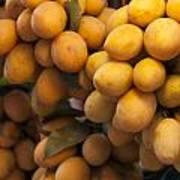 Market Mangoes Art Print