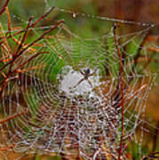 Marsh Spider Web Art Print