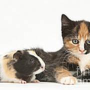 Matching Kitten & Guinea Pig Art Print