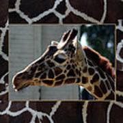 Matted Giraffe Art Print