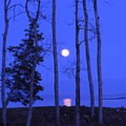 May Moon Through Birches Art Print