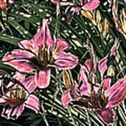 Meadow Sunrise Art Print