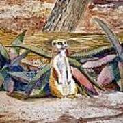 Meerkat And Aloe Art Print