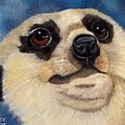 Meerkat Eyes Art Print