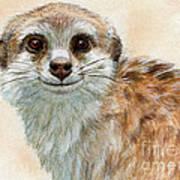 Meerkat 762 Art Print