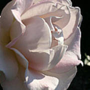 Memorial Rose Art Print