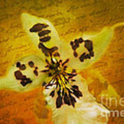 Memories Of An  Orchid Art Print
