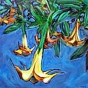 Mendocino Angel Trumpet Art Print by Sheila Tajima