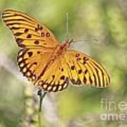 Merritt Butterfly Art Print