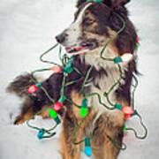 Merry Merry Bark Bark Art Print